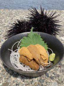 朝採れウニのお刺身を7月中旬まで期間限定でご提供しております。